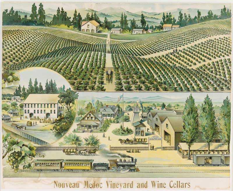 old print of nouveau Médoc vineyard